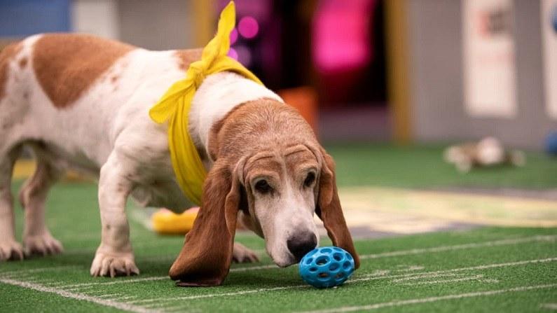 watch puppy bowl online