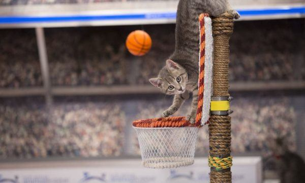 watch Meow Madness online