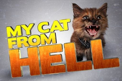watch my cat from hell online