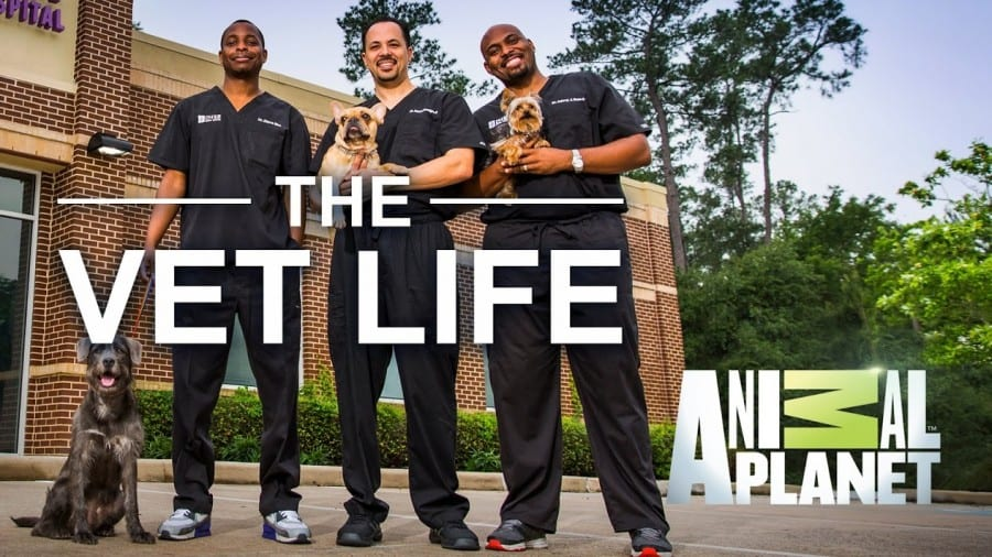 watch The Vet Life online