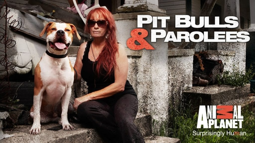 watch Pit Bulls & Parolees online