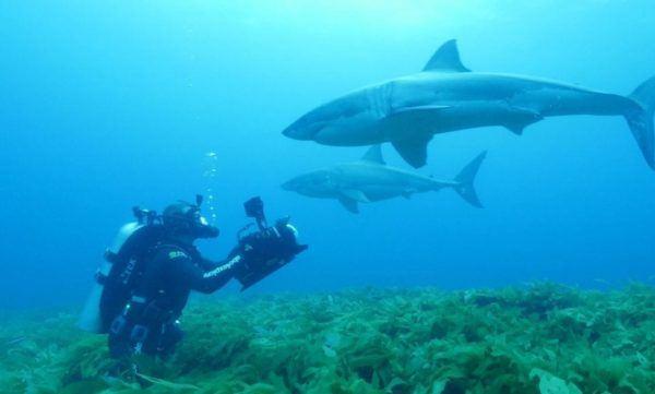 watch Shark Vortex online